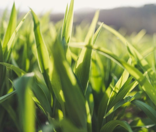 Image of grass close up